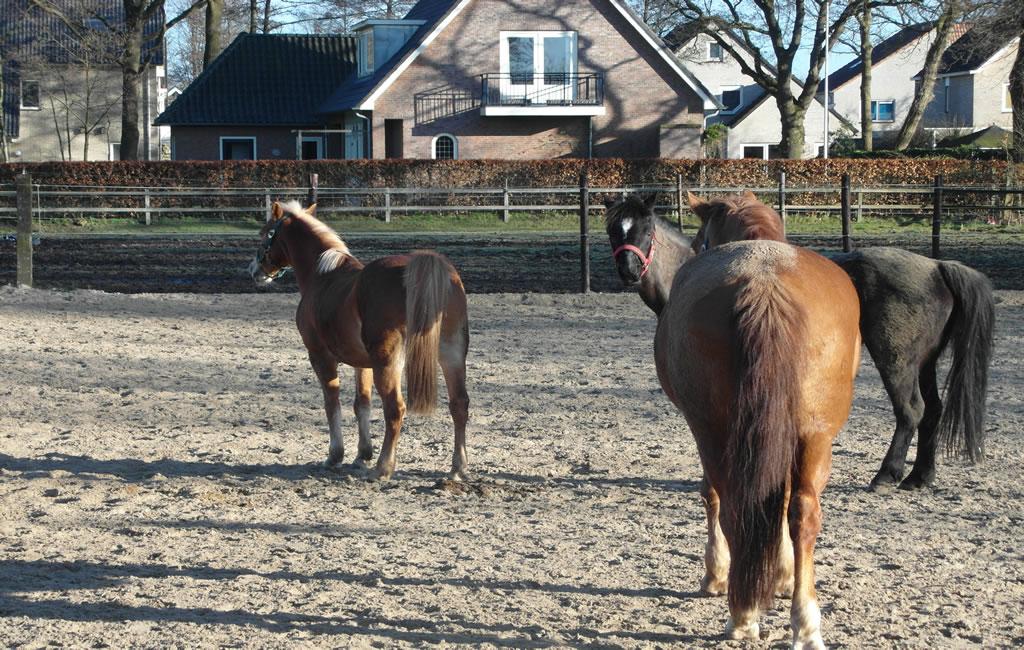 slider2_manege_paarden