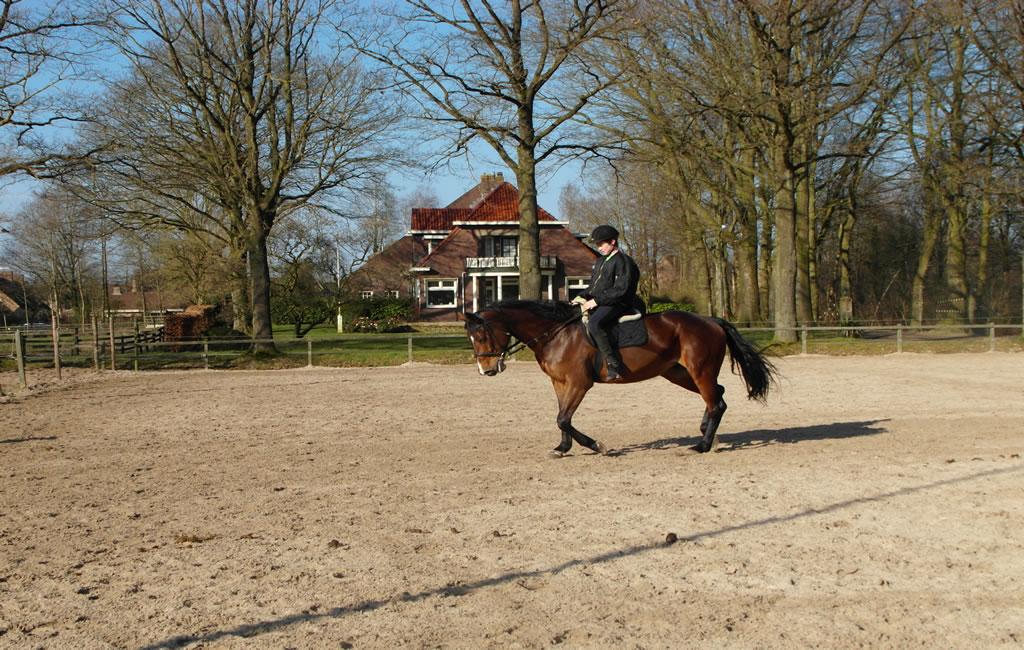 slider4_manege_paarden