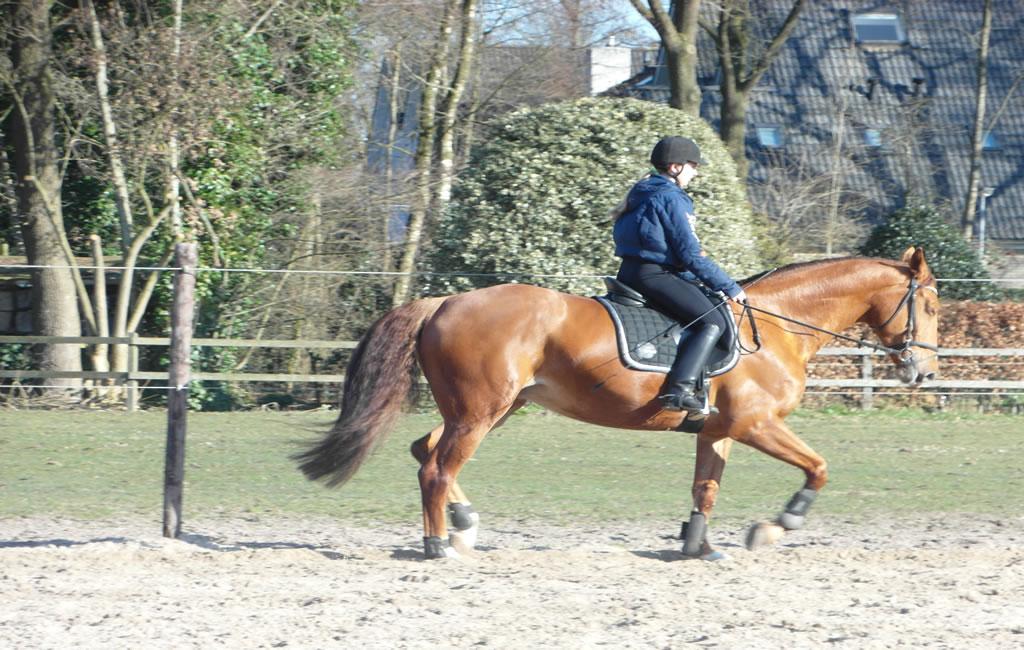 slider7_manege_paarden