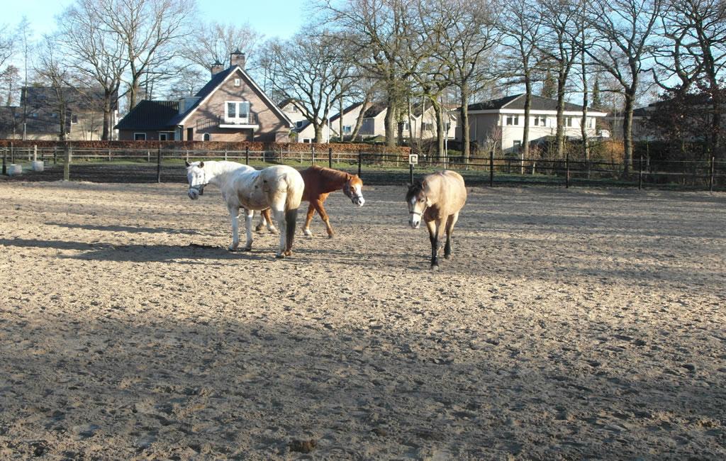 slider_manege_paarden